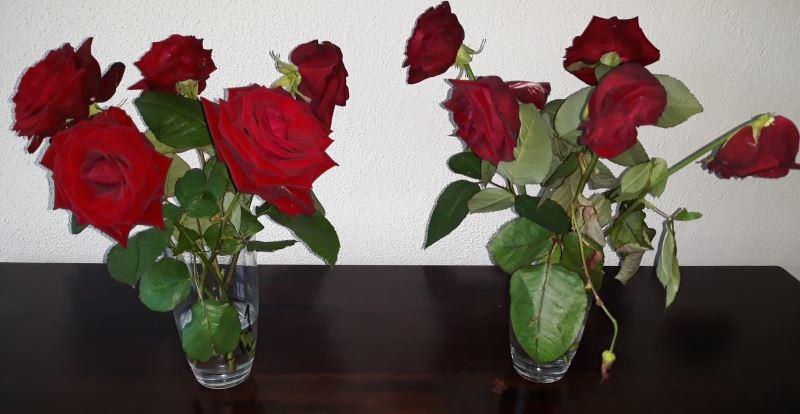bloemen blijven langer staan in echt zuiver water